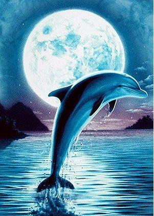 Дельфины красивые картинки и фото (30)