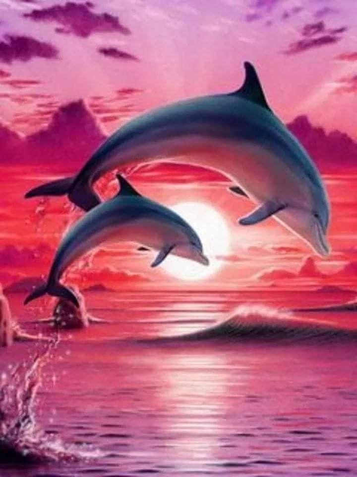 Дельфины красивые картинки и фото (6)