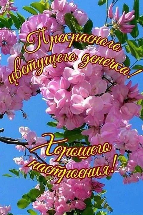 Доброе утро картинки красивые для девушек с цветами (1)