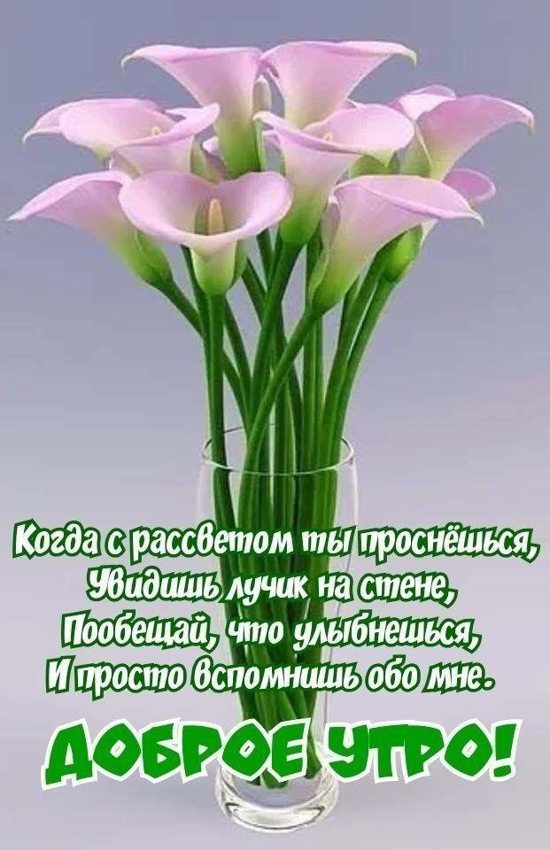 Доброе утро картинки красивые для девушек с цветами (20)