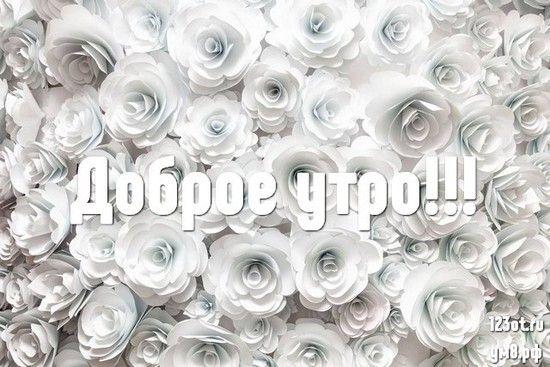 Доброе утро картинки красивые для девушек с цветами (9)