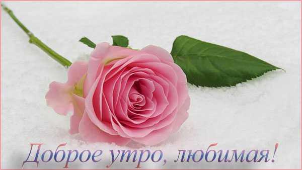 Доброе утро любимая картинки красивые цветы с пожеланиями (5)