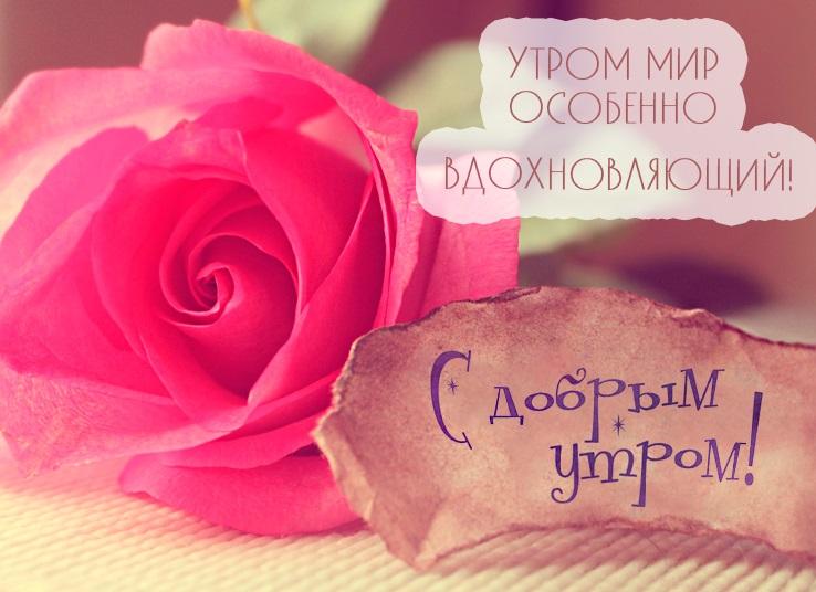 Доброе утро любимая картинки красивые цветы с пожеланиями (7)