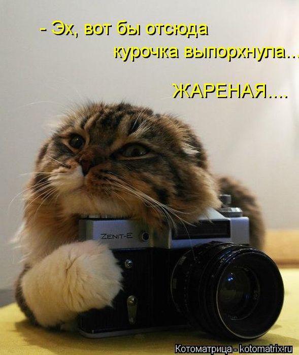 Домашние фото прикольные картинки (6)