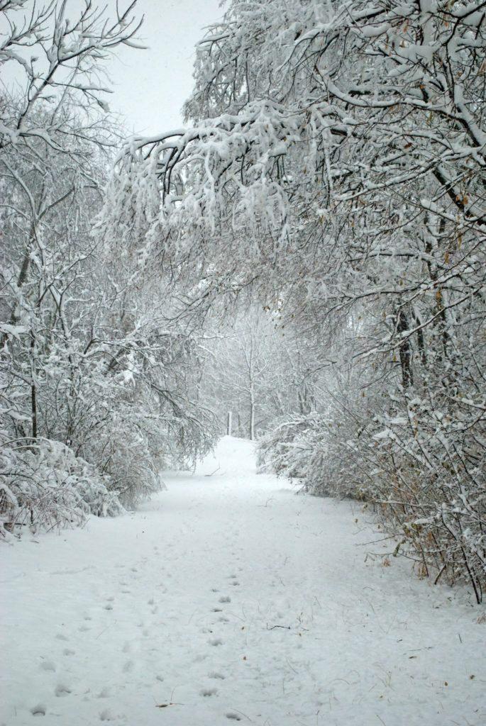 Зима красивые картинки и фотографии (1)