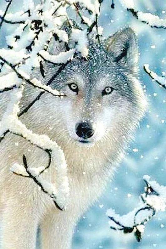 Зима красивые картинки и фотографии (4)