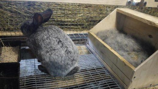 Как подготовить маточник для кроликов к утеплению (1)