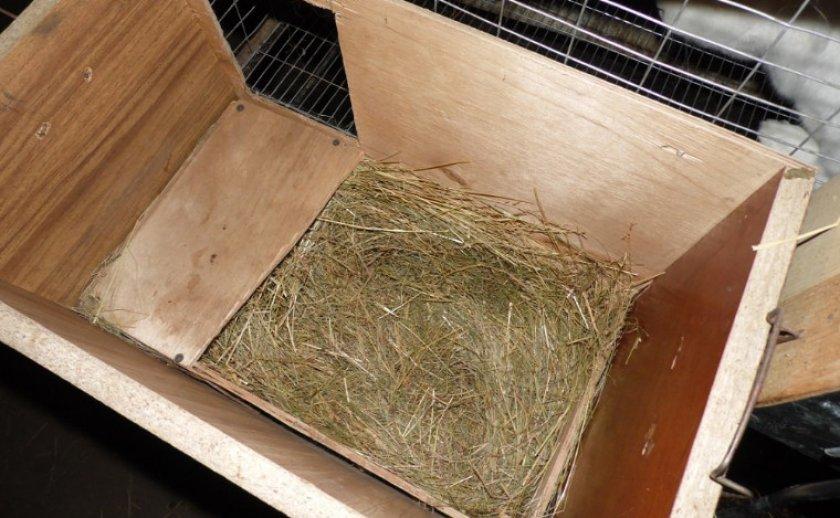 Как подготовить маточник для кроликов к утеплению (2)