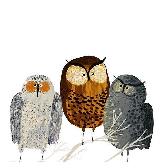 конкурса картинки для плакатов совы том как обложить