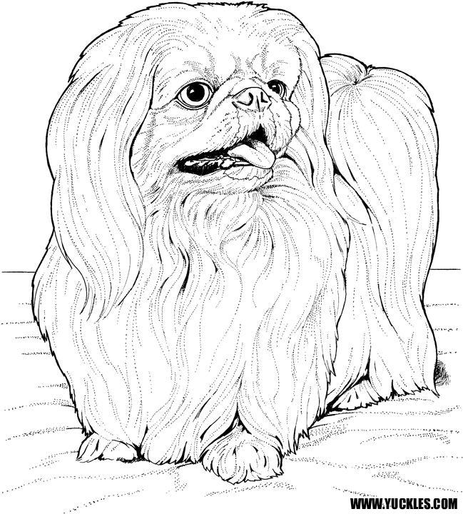 Как рисовать Пекинеса - подборка рисунков (13)