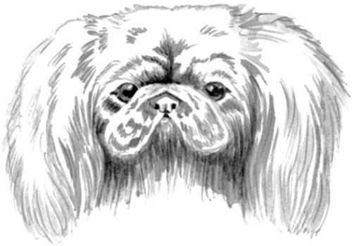 Как рисовать Пекинеса - подборка рисунков (17)
