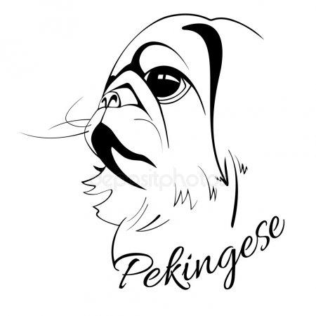 Как рисовать Пекинеса - подборка рисунков (9)