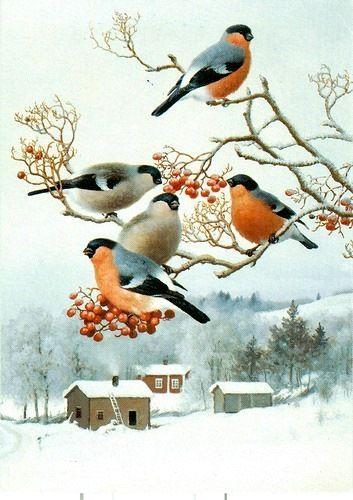 Картинки Снегири и Рябина (17)