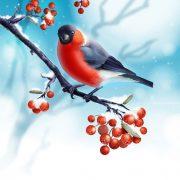 Картинки Снегири и Рябина (27)