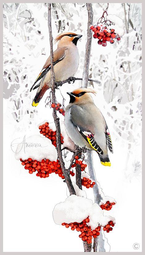 Картинки Снегири и Рябина (29)