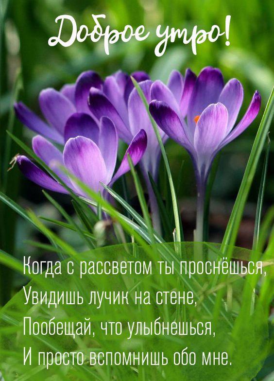 Картинки и открытки доброе весеннее утро - 20 фото (7)