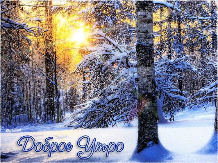 Картинки и открытки доброе зимнее утро - 20 фото (2)