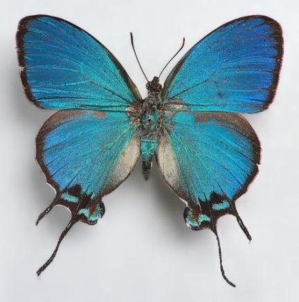 Картинки красивые бабочки нарисованные - подборка изображений (17)