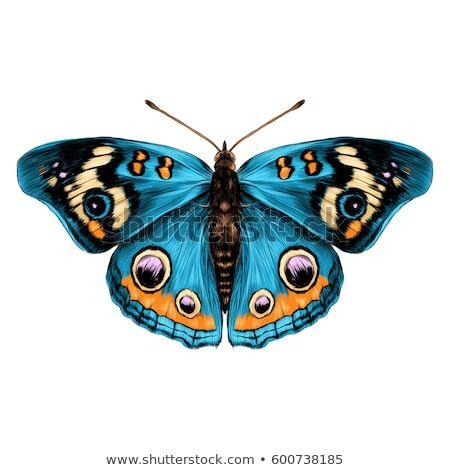 Картинки красивые бабочки нарисованные - подборка изображений (18)