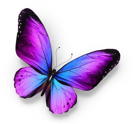 Картинки красивые бабочки нарисованные - подборка изображений (21)