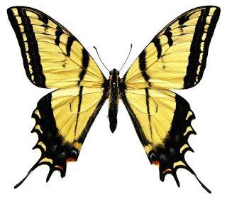 Картинки красивые бабочки нарисованные - подборка изображений (22)