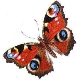 Картинки красивые бабочки нарисованные - подборка изображений (24)