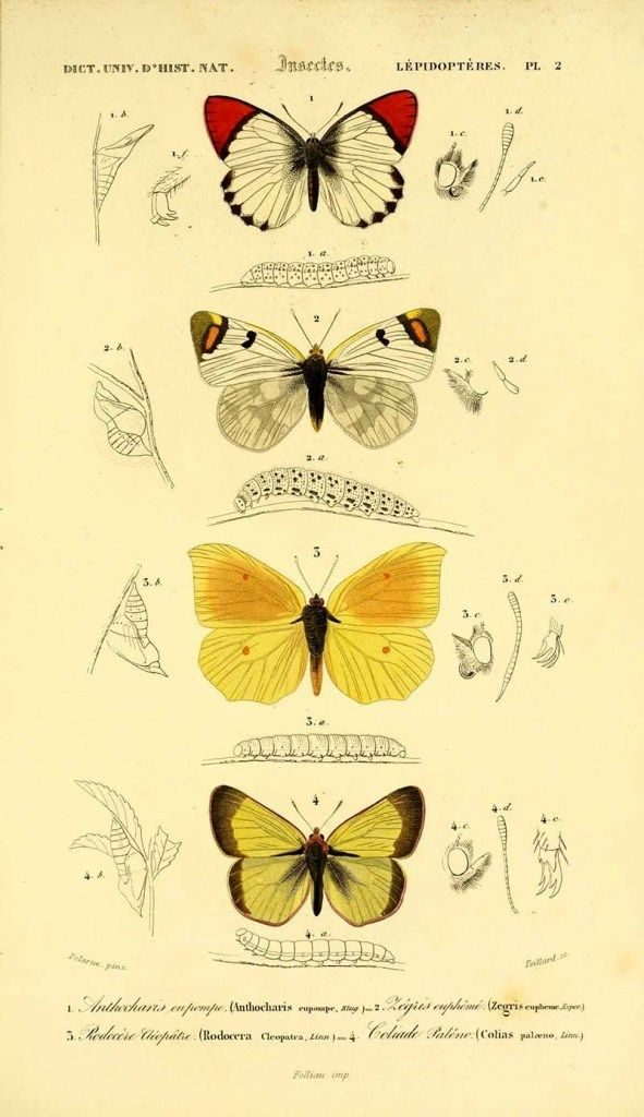 Картинки красивые бабочки нарисованные - подборка изображений (4)