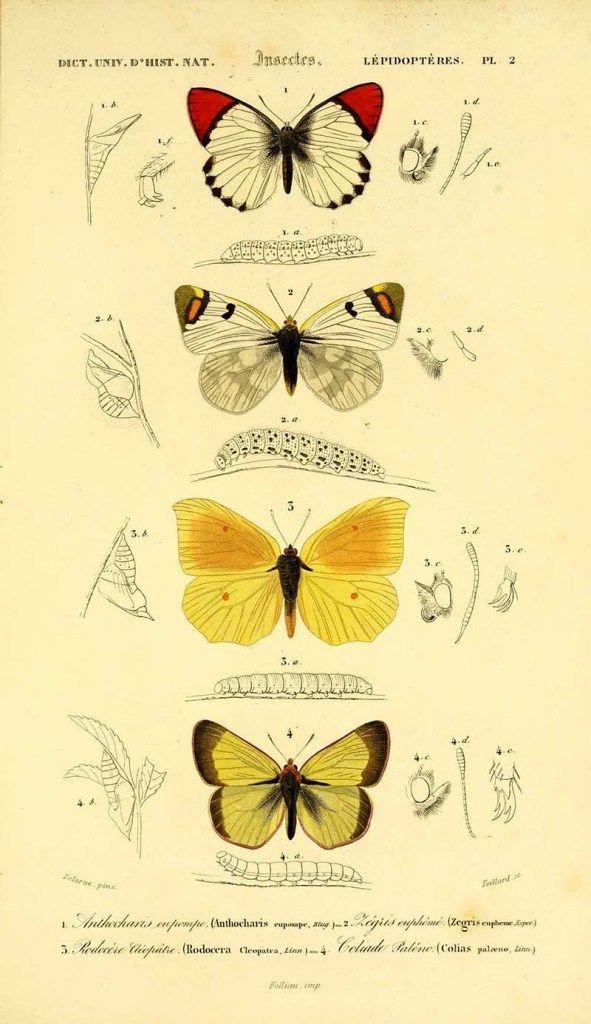 Картинки красивые бабочки нарисованные   подборка изображений (4)