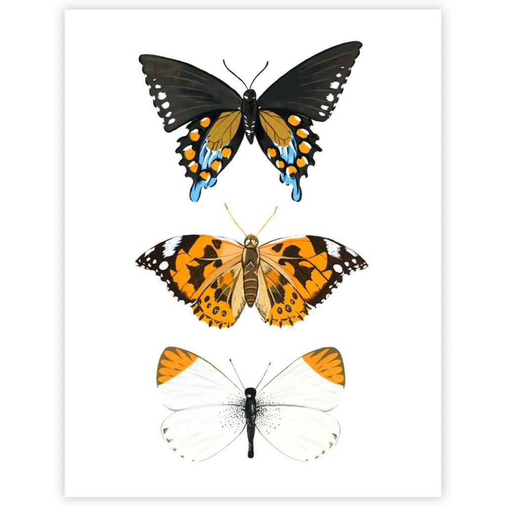 Картинки красивые бабочки нарисованные - подборка изображений (6)