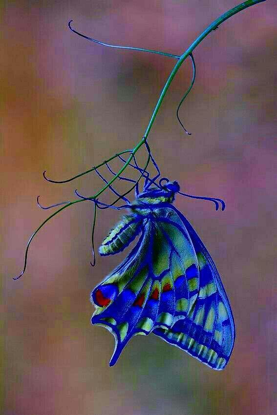 Картинки красивые бабочки нарисованные - подборка изображений (9)