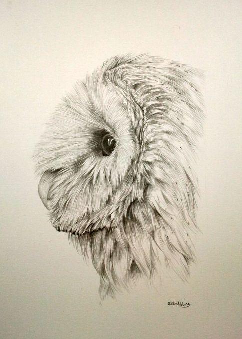 Картинки нарисованные карандашом птицы (7)