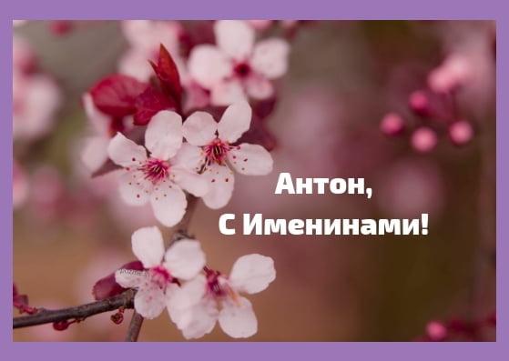 Картинки на именины Антона с днем Ангела - красивые открытки (12)