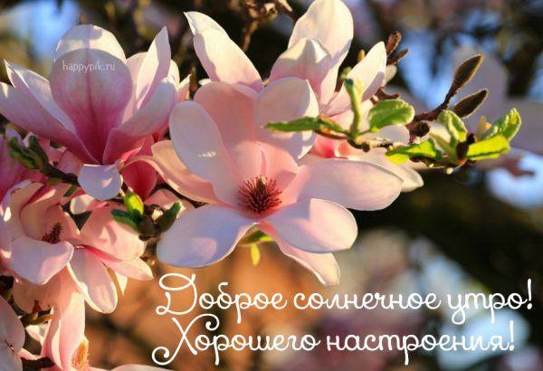 Картинки пожелания добра и счастья - 25 открыток (18)