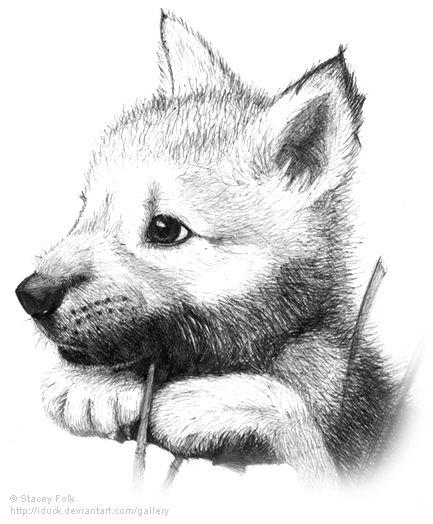 Картинки про собак карандашом - подборка (20)