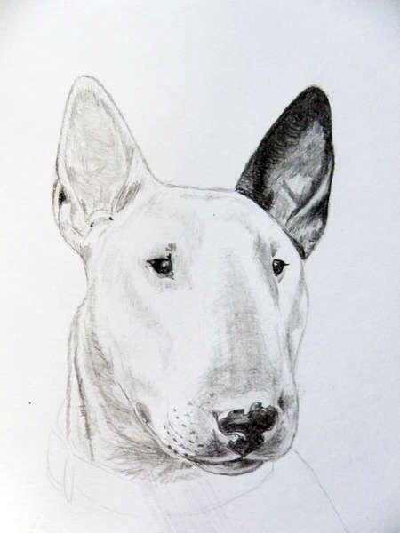 Картинки про собак карандашом - подборка (24)