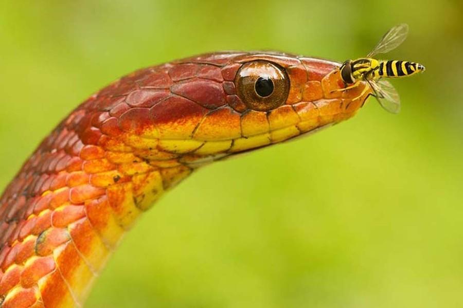 Картинки самые красивые змеи - подборка 15 фото (1)