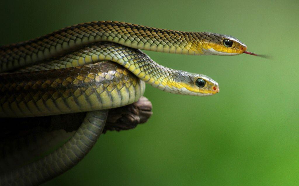 Картинки самые красивые змеи - подборка 15 фото (12)