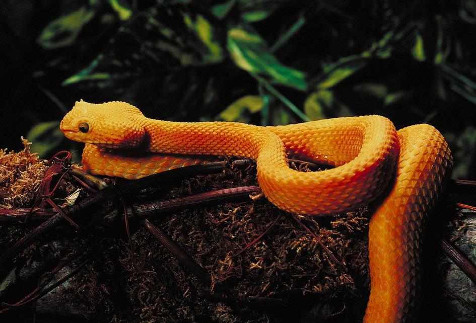 Картинки самые красивые змеи - подборка 15 фото (13)