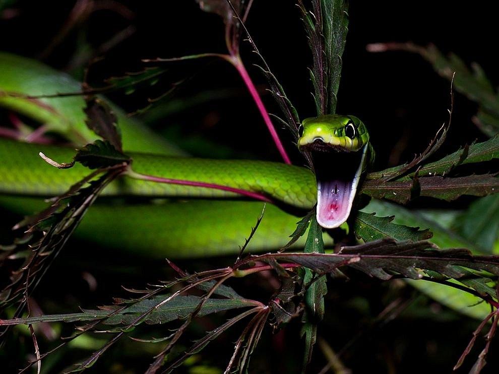 Картинки самые красивые змеи - подборка 15 фото (14)
