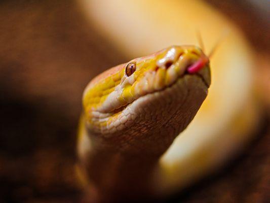Картинки самые красивые змеи - подборка 15 фото (3)
