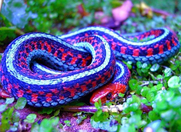 Картинки самые красивые змеи - подборка 15 фото (4)