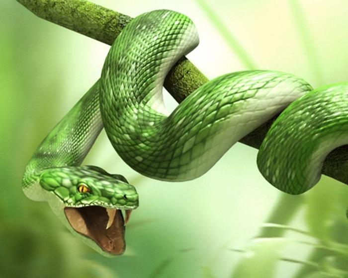 Картинки самые красивые змеи - подборка 15 фото (5)