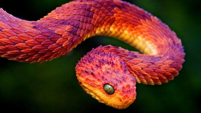 Картинки самые красивые змеи - подборка 15 фото (6)