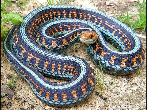 Картинки самые красивые змеи - подборка 15 фото (8)