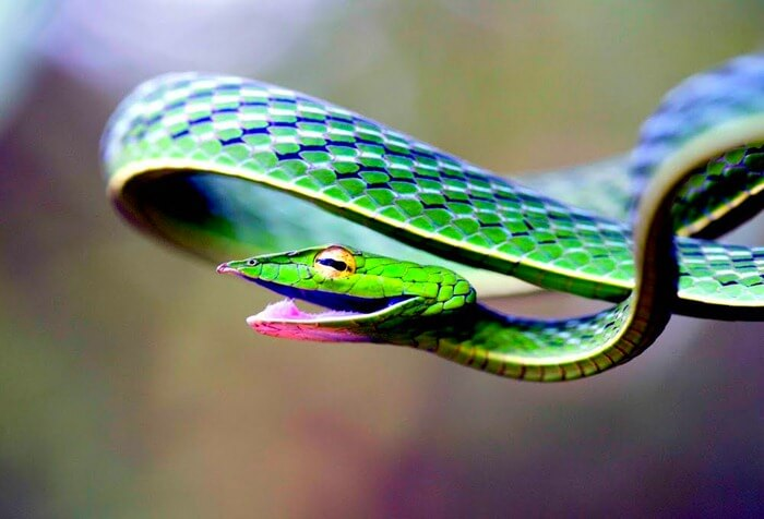 Картинки самые красивые змеи - подборка 15 фото (9)