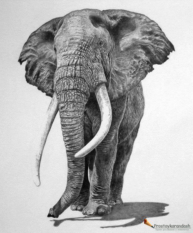 Картинки слон рисунок и картинки (14)