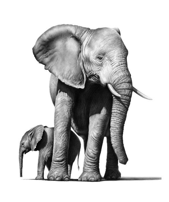 Картинки слон рисунок и картинки (27)