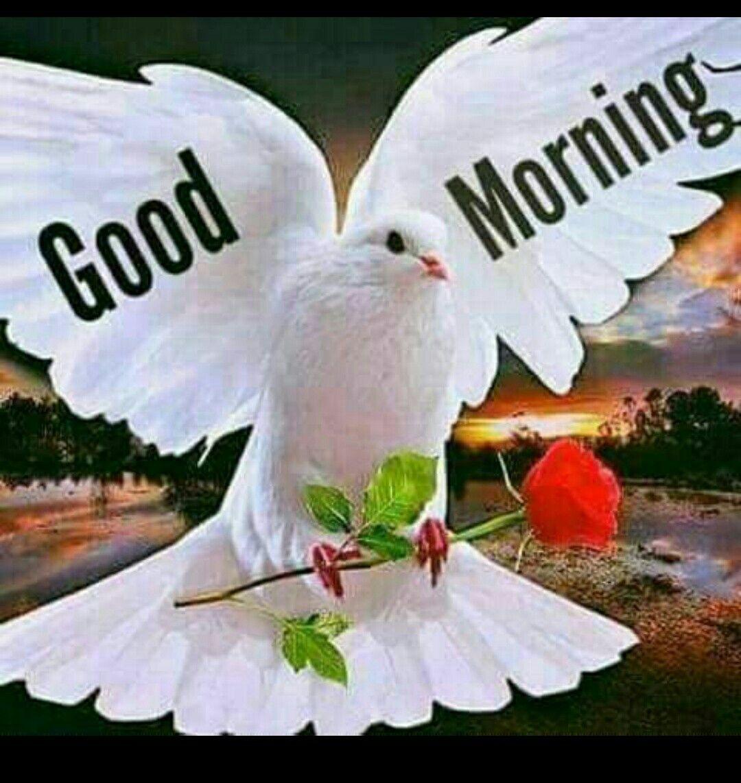 Картинки с добрым утром и хорошего дня девушке (3)