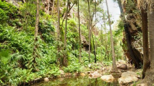 Картинки тропического леса   подборка (1)