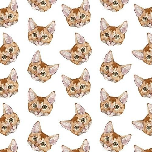 Картинки тумблер кот и котики (12)